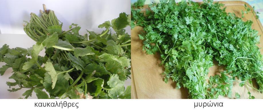 http://www.kopiaste.info/wp-content/uploads/2009/05/herbs-greek1.jpg