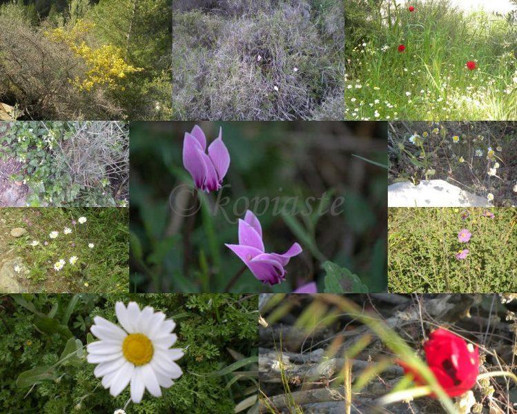 Κολάζ λουλούδια στον Υμηττό