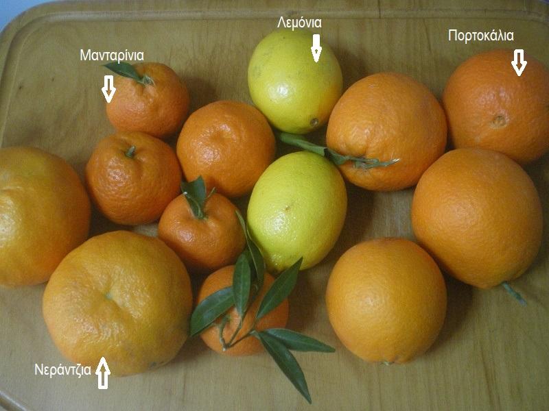 Τέσσερα διαφορετικά εσπεριδοειδή εικόνα
