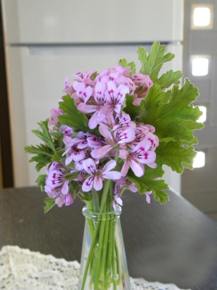 Λουλούδια αρμπαρόριζας εικόνα