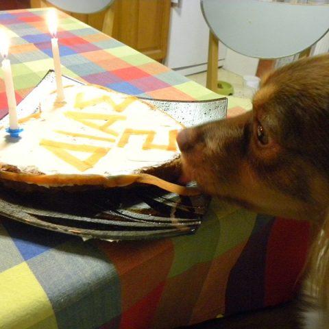 Κέικ Σκύλου με Μήλο, Μπανάνα και Ελαιόλαδο