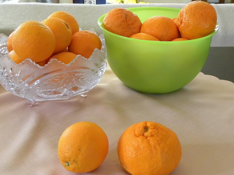 Μανταρίνια και Πορτοκάλια εικόνα