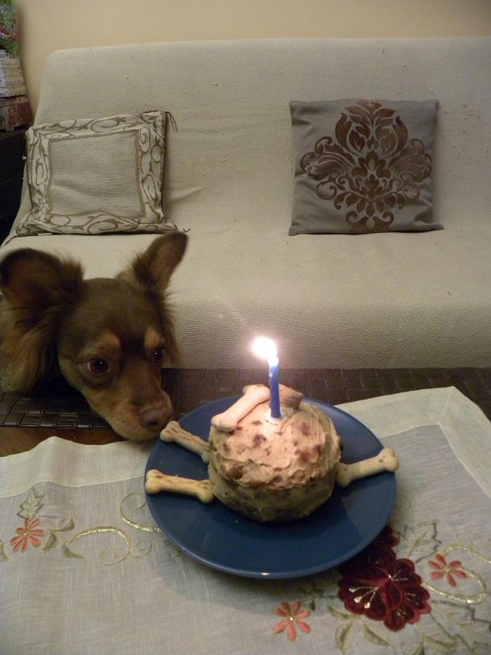 Σκυλο-κέικ Φυστικοβούτυρου Γιαουρτιού Με Μήλο και Καρότο
