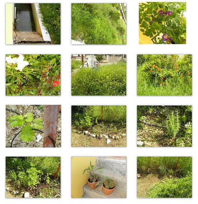 Ο κήπος μας στην Ασίνη εικόνα