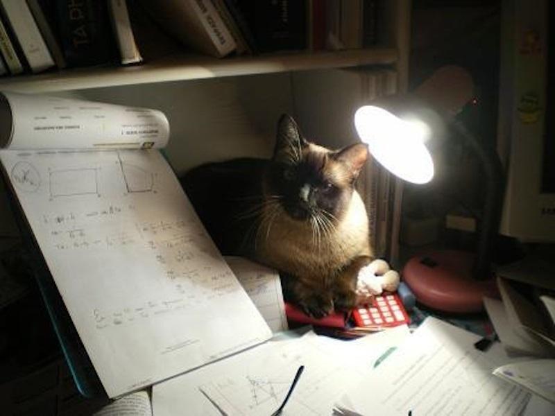 Η Λίζα μαθαίνει μαθηματικά εικόνα