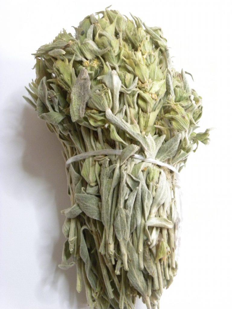 Ματσάκι από τσάι του βουνού εικόνα